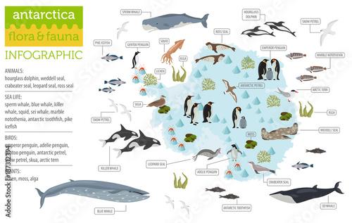 Fotografie, Obraz  Antarctic, Antarctica,  flora and fauna map, flat elements