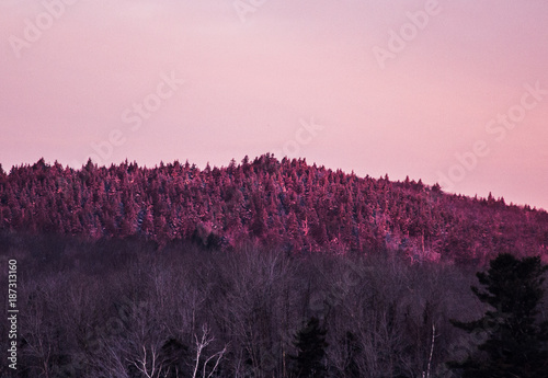 Poster Lichtroze sunrise over frosted pines