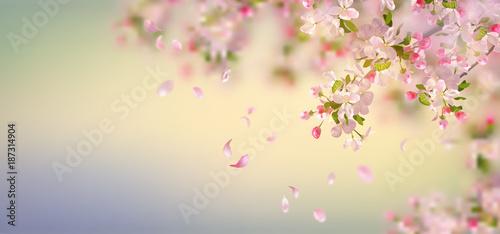 Obrazy kwiat jabłoni   wiosenny-kwiat-jabloni