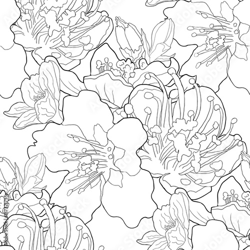 seamless pattern coloring flower of the almond blossoms a nut  illustration Poster