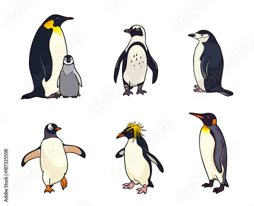Acrylic Prints Birds, bees Set of different penguins - vector illustration