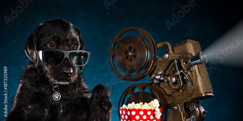 Photo Black funny dog with old style movie projector.