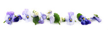 Purple Blue Pansy Flowers And ...