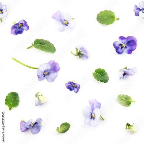 wzor-fioletowy-niebieski-pansy-wiosennych-kwiatow-i-lisci-na-bialym-tle-kwi