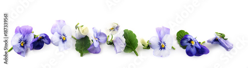 Papiers peints Pansies purple blue pansy flowers and leaves in a row, spring banner background in panoramic format isolated with small shadows on a white background