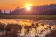 Lovely spring marsh at sunset, colorful nature landscape