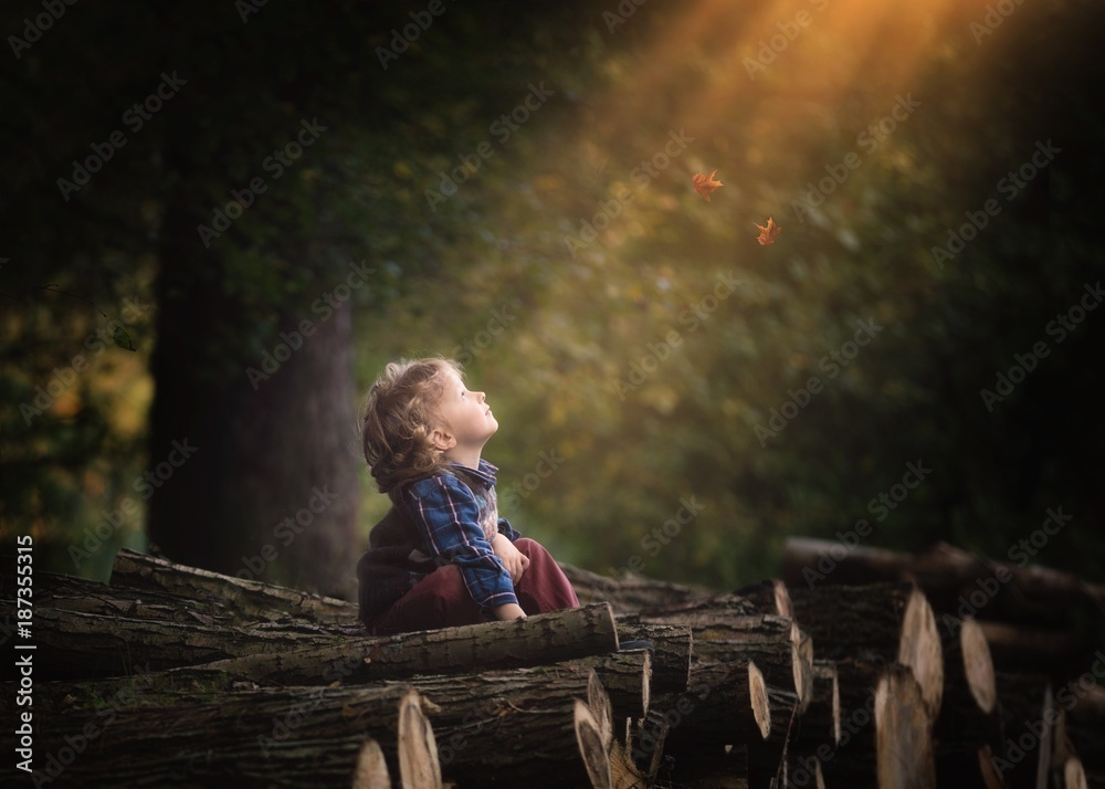 Fototapety, obrazy: Young caucasian boy wathing falling leaves in autumn. Curly hair boy
