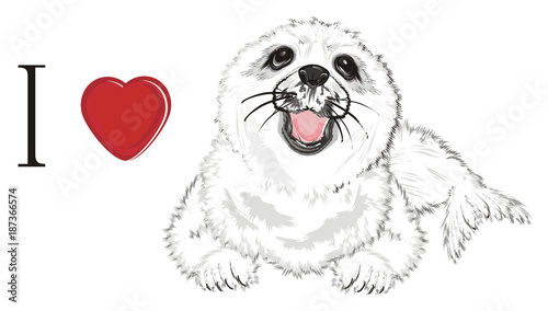 Poster Croquis dessinés à la main des animaux seal, white seal, baby seal, animal, ice, cold, snow, fur, illustration, white, cute, funny, winter, nature, background, nature, isolated, zoo, ocean, sea, red, love, heart, i love seal