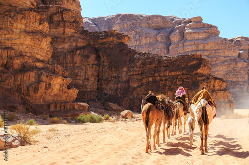 Fotografering  Caravan of camels walking in the Wadi Rum desert in Jordan