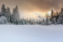 Wintertime - Black Forest. Winter Landscape With Firs Covered By Snow And Sun Appearing In The Background.