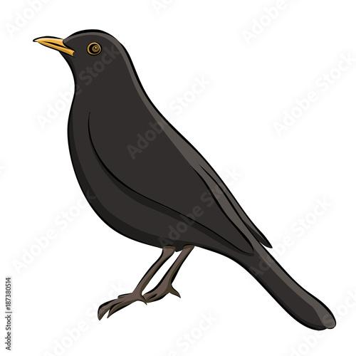 Hand drawn blackbird sketch, vector Wallpaper Mural
