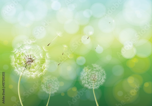 c465dc3092306 Vector illustration of spring background with white dandelions. Dandelion  seeds blowing from stem.
