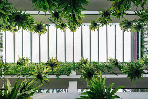 Vertical Garden   Green Tropical Plants Hanging In Bright White Building