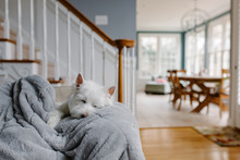 Cute White Dog Snuggling A Blanket On A Couch