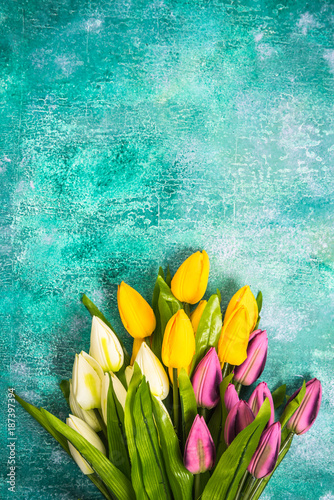 Foto op Plexiglas Tulp Vibrant tulips on concrete background.Easter or Spring template