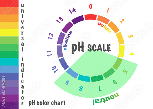Scale Of Ph Value For Acid And Alkaline Solutions Infographic Acid