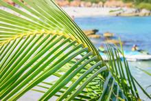 Closeup Of A Palm Leaf, Branch...