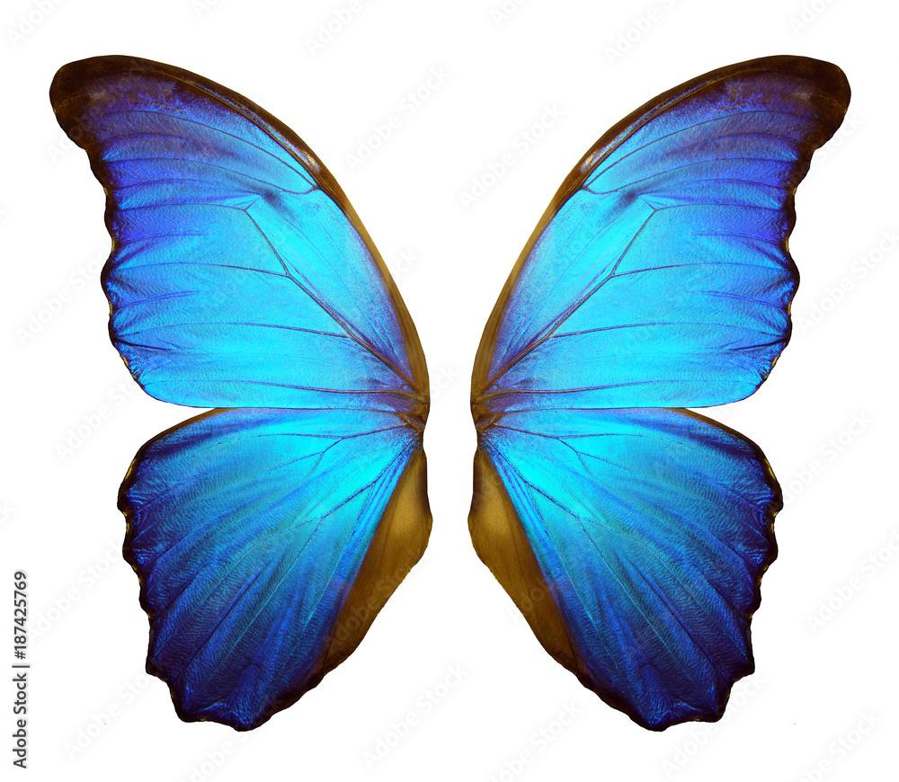 Fotografie, Obraz  Wings of a butterfly Morpho