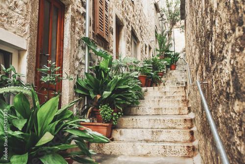 Piękna ulica z kwiatami w Hvar miasteczku, Hvar wyspa, Dalmatia, Chorwacja
