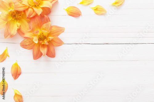 Foto op Canvas Bloemen background with flowers dahlias