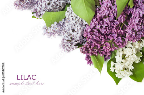 Fotobehang Lilac Lilac flowers bunch isolated on white background with sample text