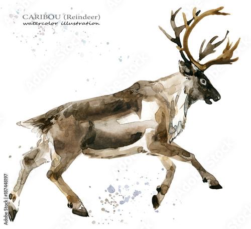 akwarela-ilustracja-wektorowa-brazowego-renifera-jelenia-realistyczny-wyglad