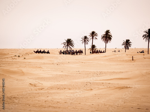 Tunisian desert landscape, Douz south of Tunisia, caravan in the desert near a palm grove