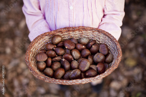 Girl with a basket full of chestnuts in an autumn background