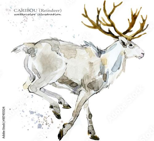 akwarela-ilustracja-wektorowa-bialego-renifera-jelenia-realistyczny-wyglad