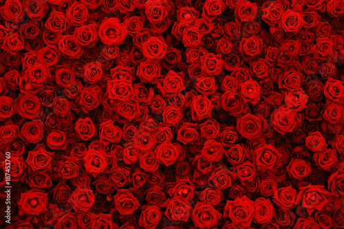 Poster Fleur Natural red roses background, flowers wall.