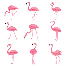 Cartoon Pink Flamingo Vector S...