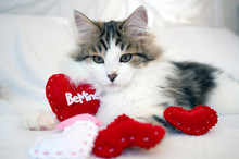 Valentine Kitten, White & Brow...