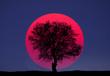 canvas print picture - Sunset magenta, big sun