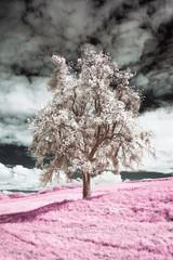FototapetaUn arbre en infrarouge, rose et blanc