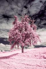 FototapetaUn arbre en infrarouge, rose
