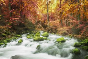 Fototapeta Jesień Rivière sous la pluie dans une forêt aux couleurs automnales