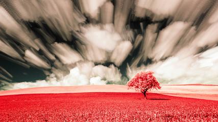 FototapetaUn arbre solitaire dans un champs en infraouge et en timestacking