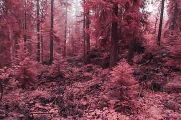 Obraz na SzkleChamp, prairie, pâturage et forêt embrumés en infrarouge, rose.