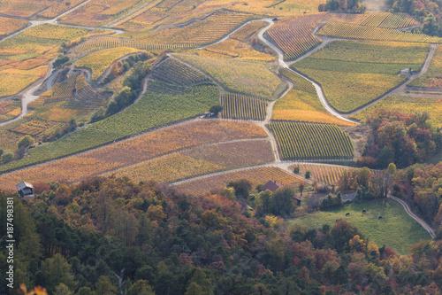 Papiers peints Gris traffic Vignes vues d'en haut en Valais
