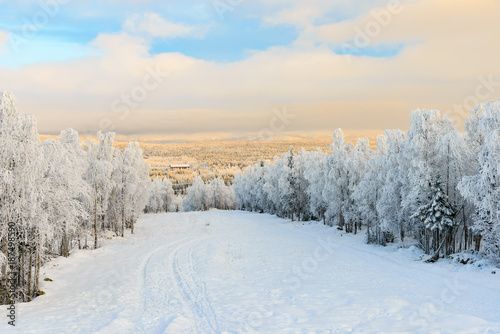 Winter landscape with a forest covered with snow Canvas Print