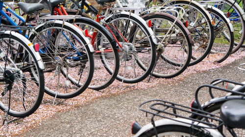 Aluminium Prints Bicycle parked bikes and cherry petals