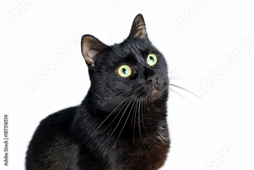Stampa su Tela Head of young black cat isolated on white