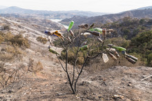 Collected Glass Bottles And Views Of Thomas Fire Damage In The Hills Around Lake Casitas In Ojai, California