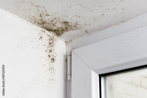 Photo Mold in the corner of the plastic windows