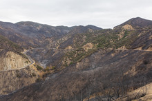 Landscape Damaged By The Thomas Fire Along Highway 33 In Ojai, California