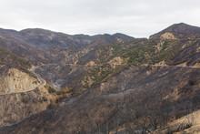 Landscape Damaged By The Thoma...