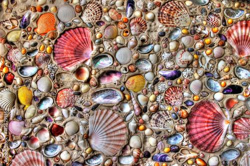 Stampa su Tela Sea Shells