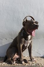 Modern Dog Listening To Music