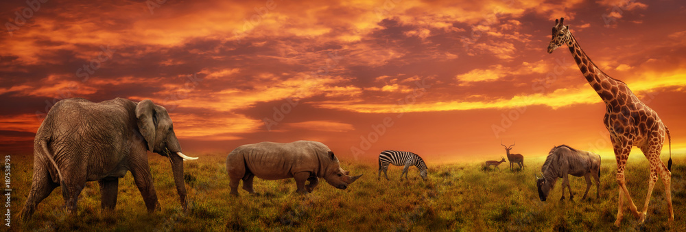 Fototapeta African sunset panoramic background with silhouette of animals