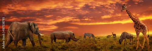 Fotografie, Obraz African sunset panoramic background with silhouette of animals